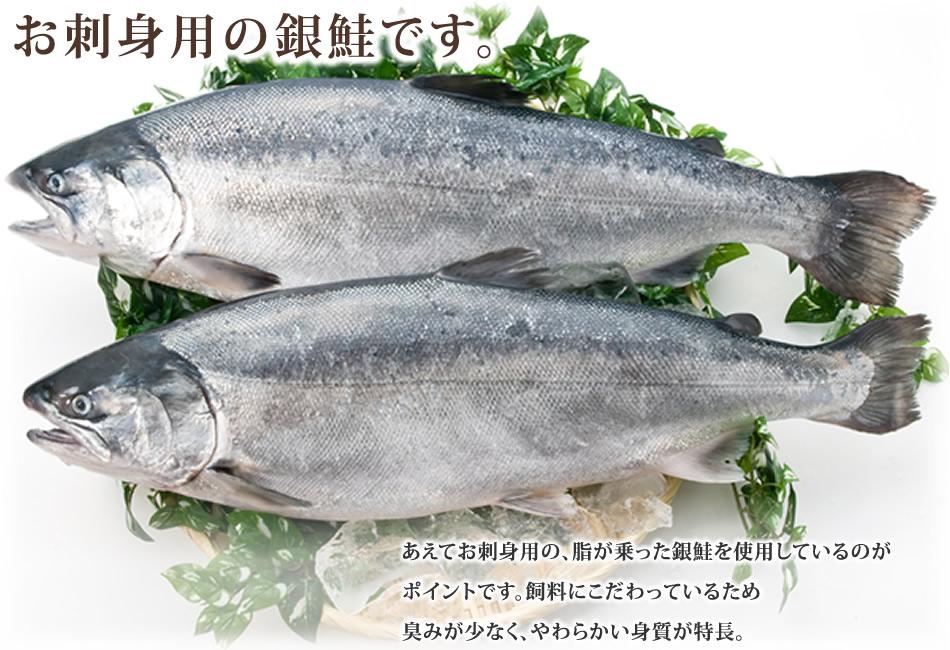 お刺身用の銀鮭です